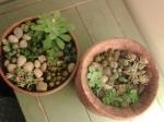 mini-jardin,végétal,plantes grasses,repiquage