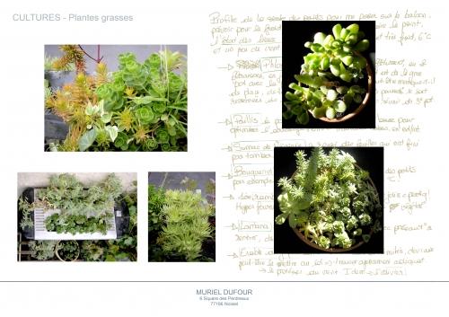Compositions,rambardes végétales,sedum rubrotinctum,crassula gollum,grasses
