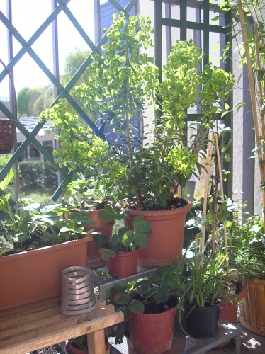 avril2011_plantesbalcon 073.JPG