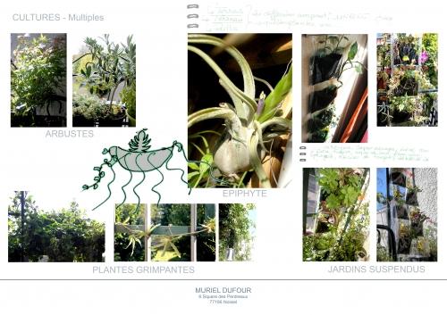 épiphytes,grimpantes,arbustes