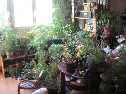 gaby_plantes_vrac_juillet2011 079.JPG