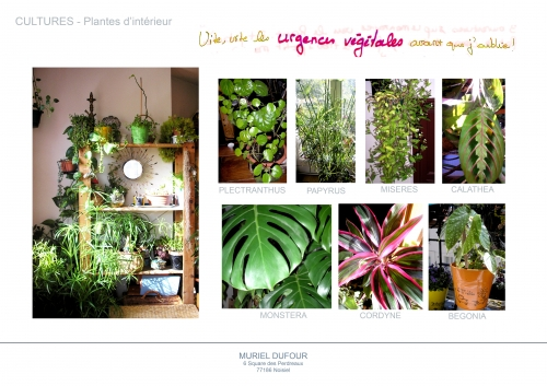 plantes vertes,couleurs,feuilles,feuillage,érigé,cascade